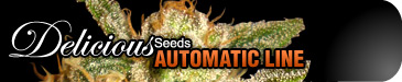 DELICIOUS FEMINISED SEEDS (AUTOMATIC LINE)