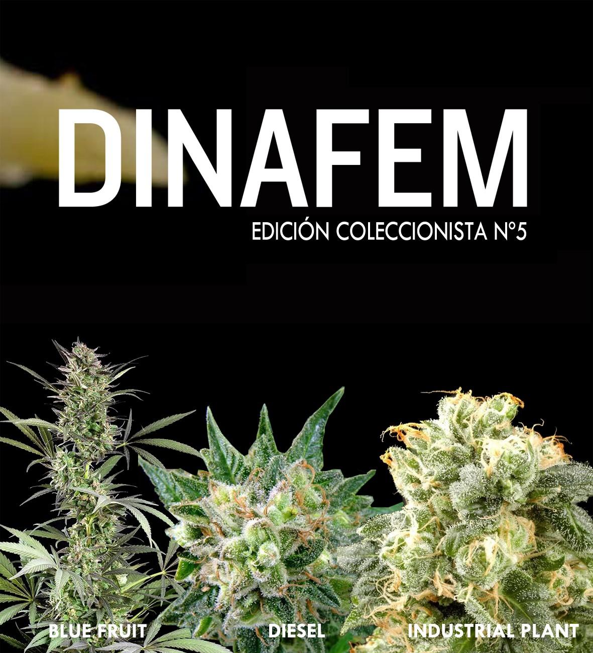 Dinafem collector #5 6 seeds
