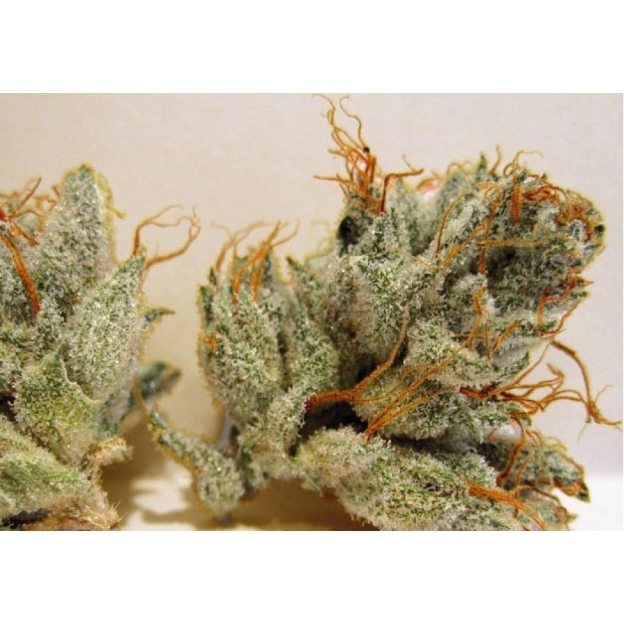 1 UND - NAPALM - FEM (BIOHAZARD SEEDS) - PICK & MIX SEEDS