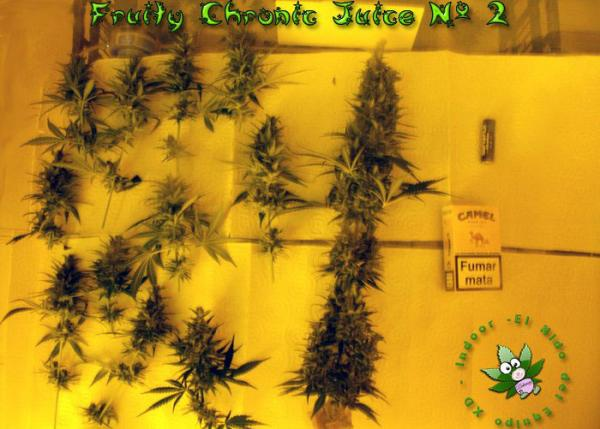 ViewFruity chronic juice