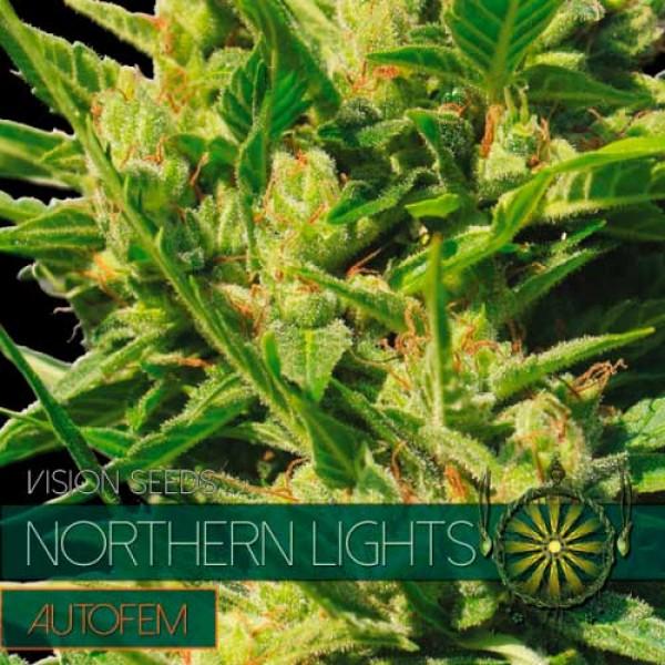 NORTHERN LIGHTS AUTO - VISION SEEDS