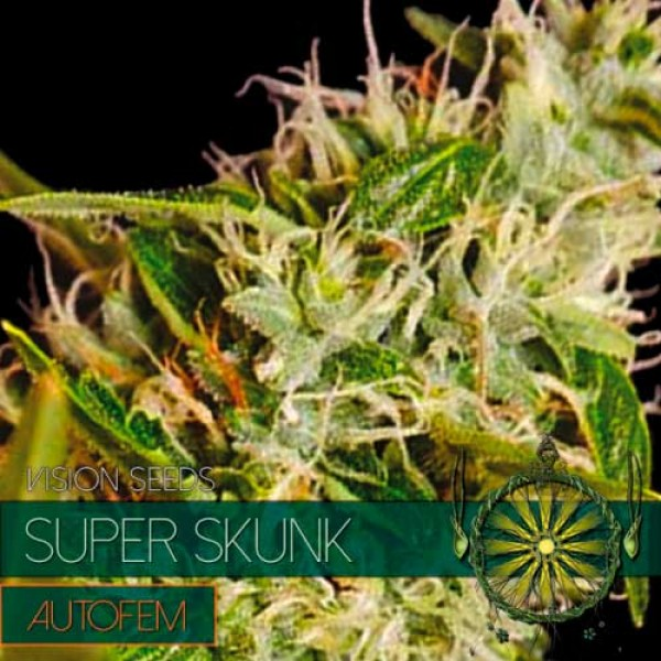 SUPER SKUNK AUTO - VISION SEEDS