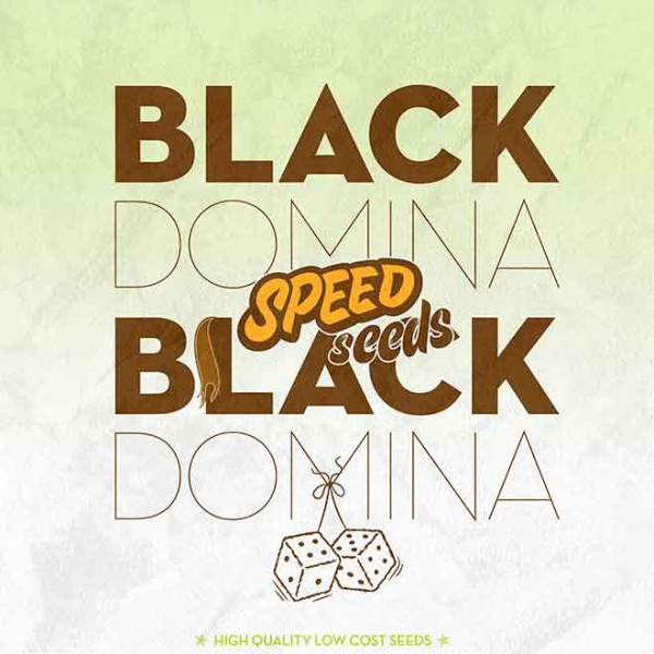 BLACK DOMINA X BLACK DOMINA - SPEED SEEDS