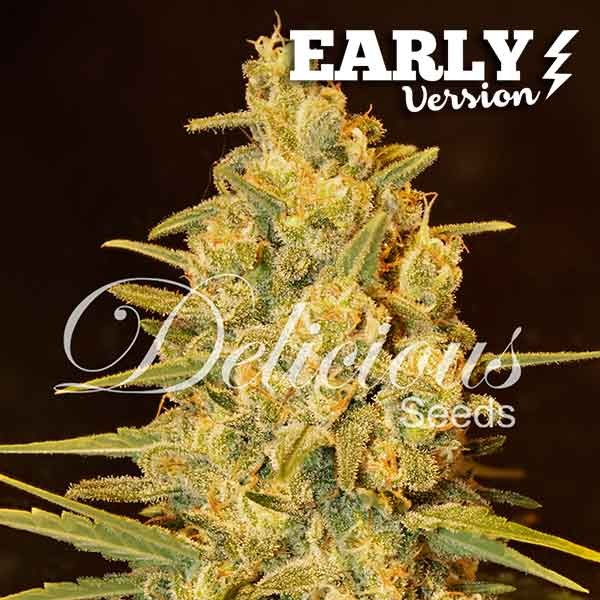 Critical Sensi Star Early Version -  -