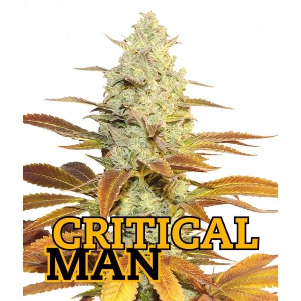 CRITICAL MAN Fem 3 Seeds (FAMILY GANJAH) - Outlet