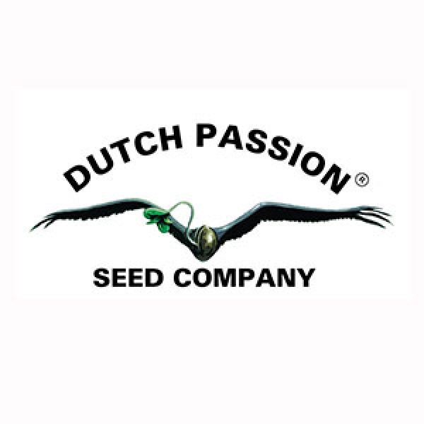 Power Light #3 - 3 Seeds Fem - DUTCH PASSION