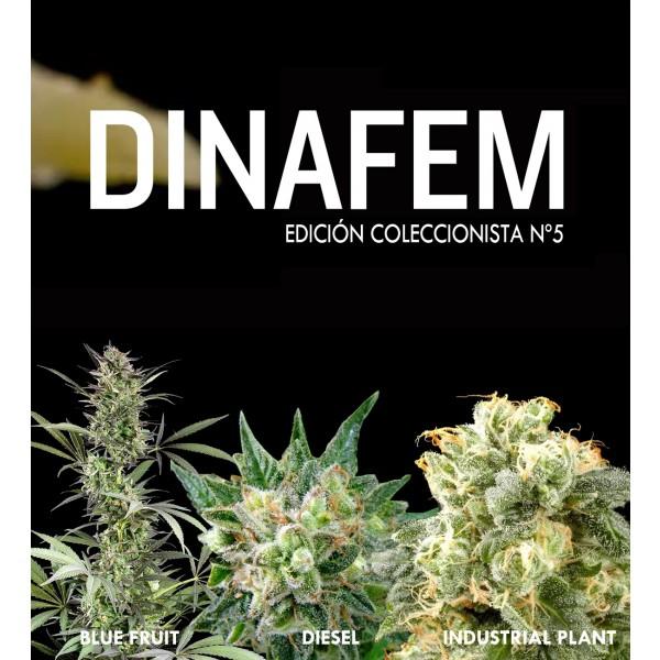 Dinafem collector #5 6 seeds - DINAFEM SEEDS