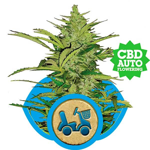 Fast Eddy Automatic - ROYAL-QUEEN SEEDS