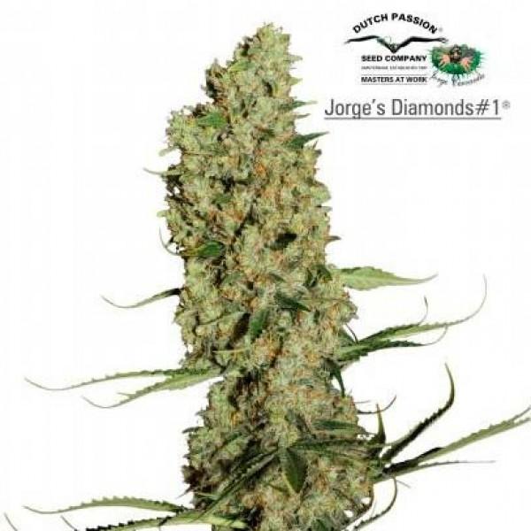 JORGE'S DIAMONDS #1 - DUTCH PASSION