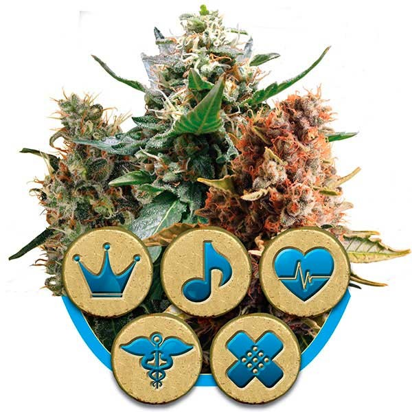Medical Mix - ROYAL-QUEEN SEEDS