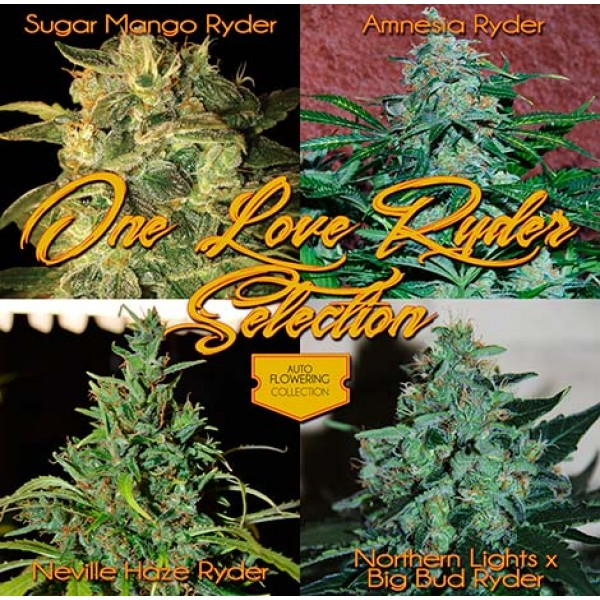 Automatic One Love Selection - Root Catalog - All Products