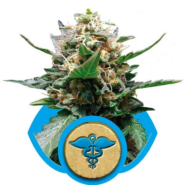 Royal Medic - ROYAL-QUEEN SEEDS