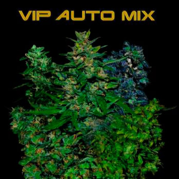 VIP AUTO MIX 5 Seeds (VIP SEEDS) - Outlet