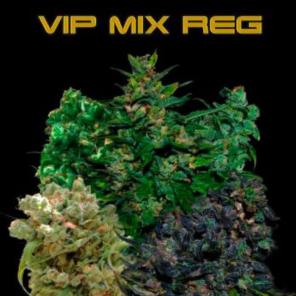 VIP MIX REGULAR 10 Seeds (VIP SEEDS) - Outlet