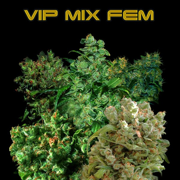 VIP MIX FEM 3 Seeds (VIP SEEDS) - Outlet