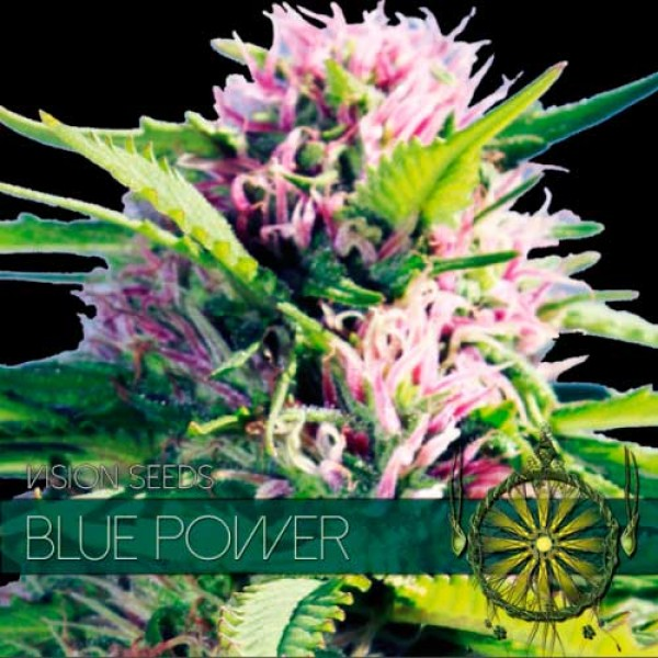 BLUE POWER - VISION SEEDS
