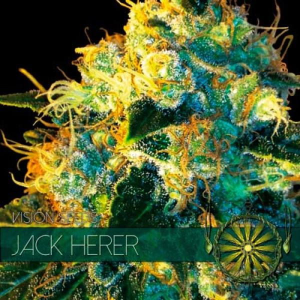 JACK HERER - VISION SEEDS
