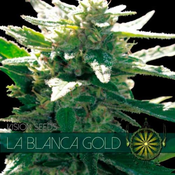 LA BLANCA GOLD - VISION SEEDS
