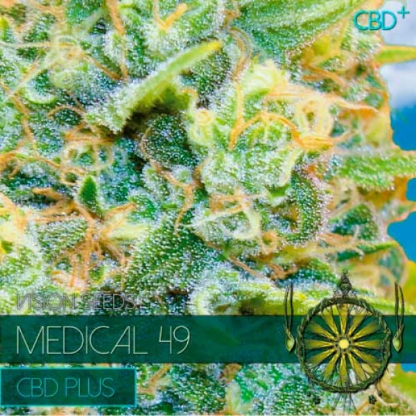 MEDICAL 49 CBD+ - VISION SEEDS
