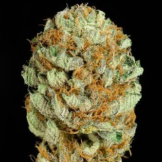BLUE KUSH - DINAFEM SEEDS