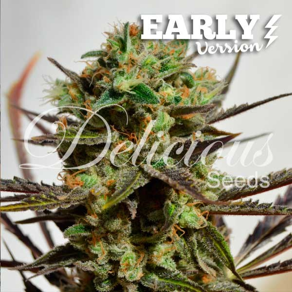 Delicious Candy Early Version