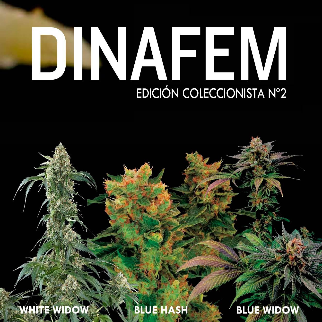 Dinafem collector #2 6 seeds - Collections - DINAFEM SEEDS