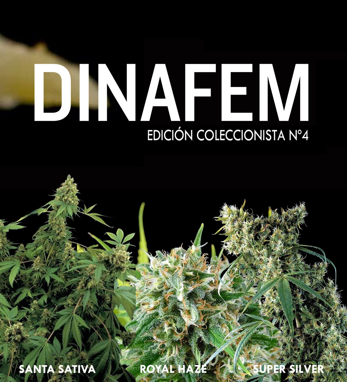 Dinafem collector #4 6 seeds