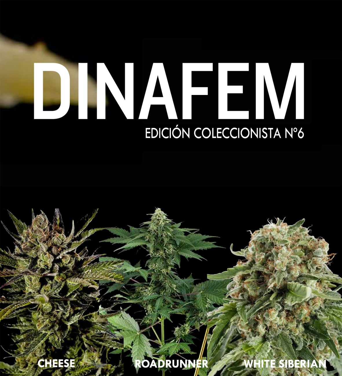 Dinafem collector #6 6 seeds - Collections - DINAFEM SEEDS