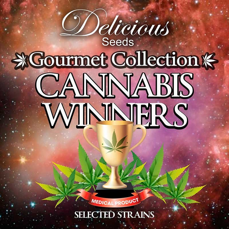 Gourmet Collection - Cannabis Winners Strains - GOURMET COLLECTION - DELICIOUS SEEDS