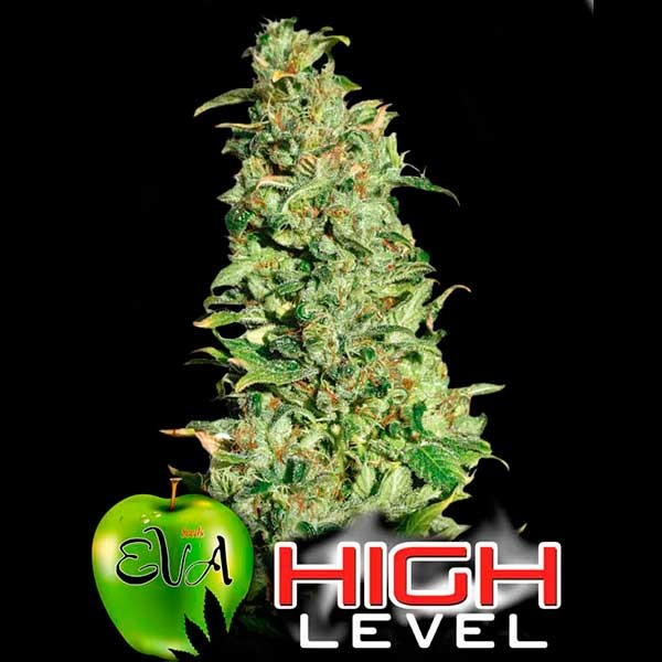 HIGH LEVEL - EVA SEEDS