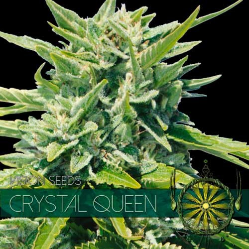 CRYSTAL QUEEN - VISION SEEDS