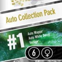 Purchase AUTO COLLECTION PACK #1