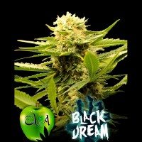 Purchase BLACK DREAM