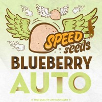 Purchase BLUEBERRY AUTO (SPEED SEEDS)