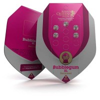 Purchase Bubblegum XL
