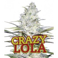 Purchase LA LOCA LOLA 10 Seeds (FAMILY GANJAH)