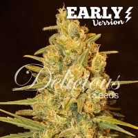 Purchase Critical Sensi Star Early Version