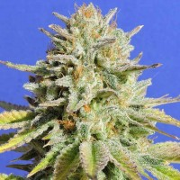 Purchase Gorilla Glue #4