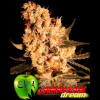 Purchase JAMAICAN DREAM