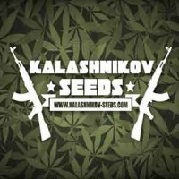 Purchase  Moscow Blueberry Auto