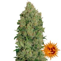 Purchase NYC DIESEL AUTO