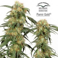 Purchase PAMIR GOLD