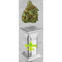 Purchase POSEIDON WHITE WIDOW - 10 UND FEM (XIII TITANES)