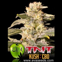 Purchase TNT KUSH CBD