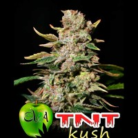 Purchase TNT KUSH