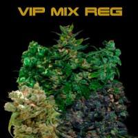 Purchase VIP MIX REGULAR 10 Seeds (VIP SEEDS)