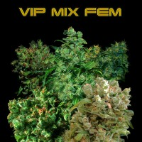 Purchase VIP MIX FEM 3 Seeds (VIP SEEDS)