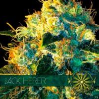 Purchase JACK HERER