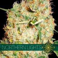 Purchase NORTHERN LIGHTS