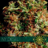 Purchase NY DIESEL